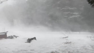 Winter storm gets brutal as winds whip through Newfoundland