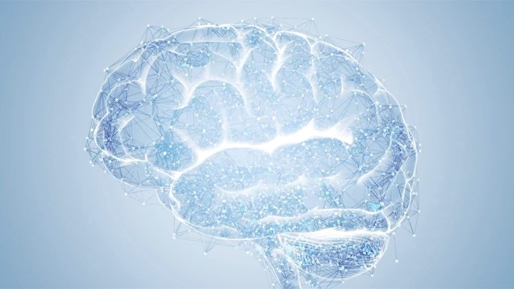 For the First Time Neuroscientists Have Tracked a Thought as It Moves Through the Human Brain