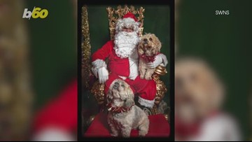 Check Out These Adorable Dogs in Their Very Own Santa Photoshoot