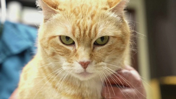 Cat App Might Be Able to Decipher How Your Pet Is Feeling!