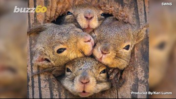 So Adorable! These Squirrels All Want to be Seen