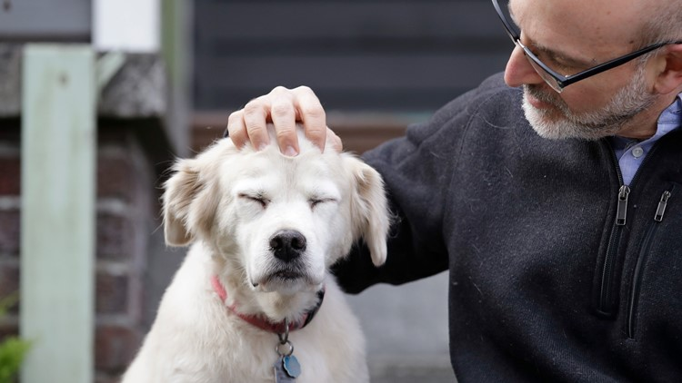 Aging Dogs Study