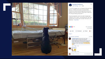 Dog's adoption requests roll in after photo shows him waiting for dead owner's return