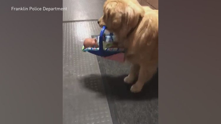 Therapy dog caught stealing Christmas toys from police department