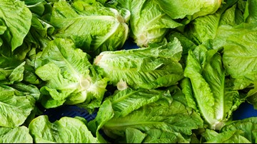 Over 130 across 25 states now sickened in romaine lettuce E. coli outbreak
