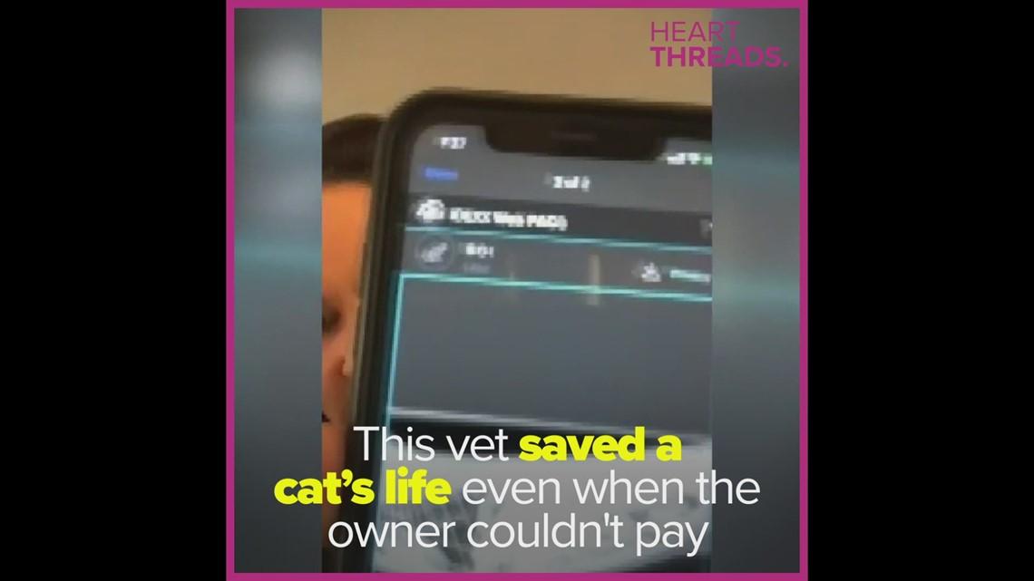Veterinarian performs life-saving surgery on cat