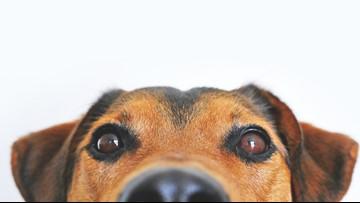 PETA insulted for calling 'pet' a derogatory term