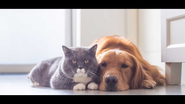 The House has passed legislation to outlaw the slaughter of dogs and cats for food– a practice that, although rare, is still legal in 44 states.