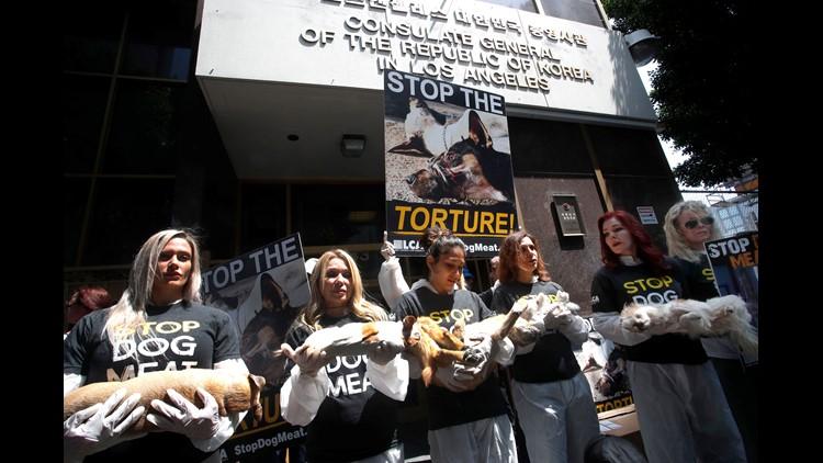 EPA USA SOUTH KOREA DOG MEAT TRADE PROTEST POL CITIZENS INITIATIVE & RECALL USA CA