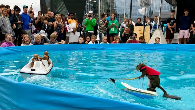 Twiggy the water-skiing squirrel performs at the X Games in Minneapolis