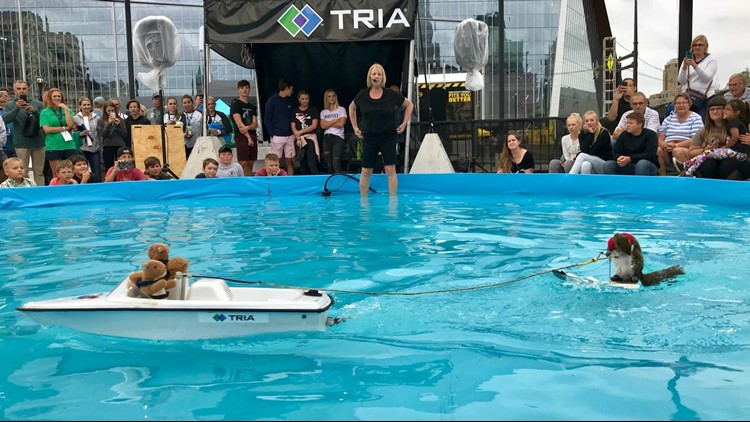 Twiggy the water-skiing squirrel in one of her final performances