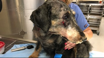Dog shot in face near campground; $500 reward for information