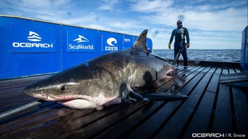 15-foot, 2,000-pound great white shark tracked south of New Orleans