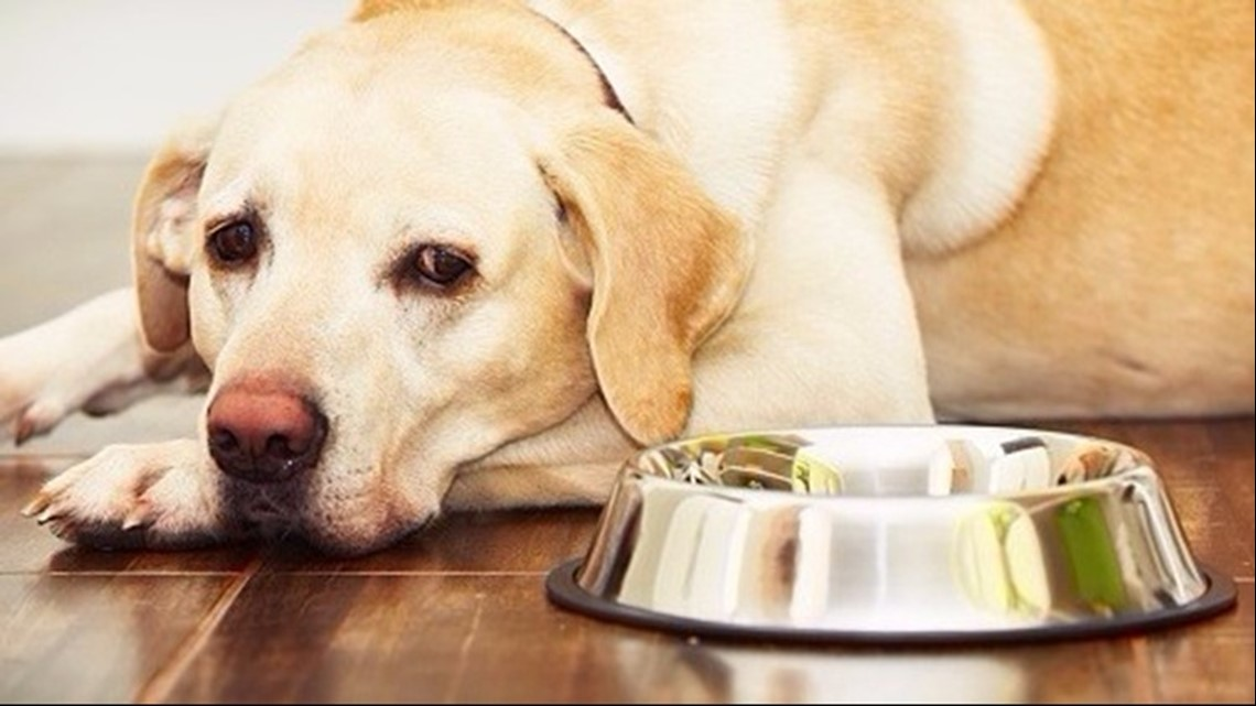 FDA expands Hill's canned dog food recall