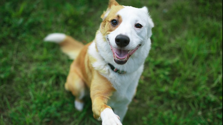 23 dogs in Washington test positive for COVID-19 antibodies