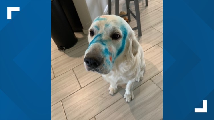 Chandler family's dog gives itself a makeover in the cutest way possible