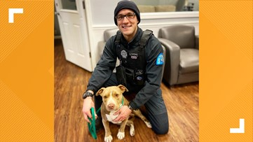 Dog who stayed by homeless owner's body in cold is 'living the life' after police officer rescues her