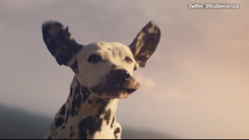 Budweiser's new Super Bowl commercial features a dog, Bob Dylan and the Clydesdales