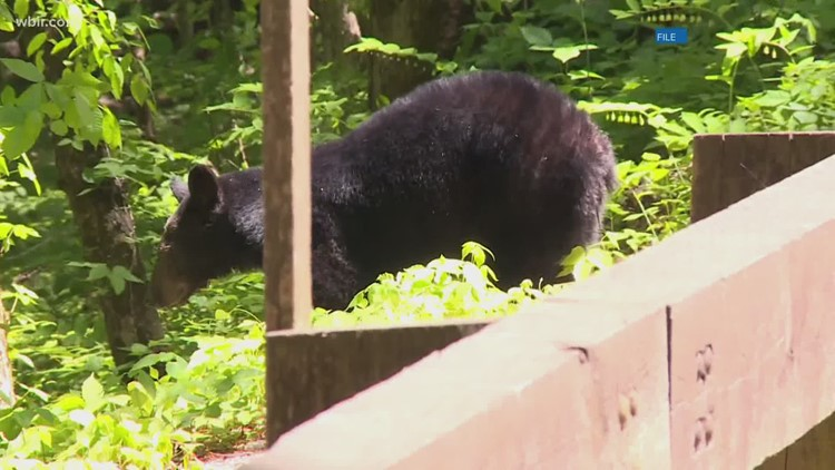 Smoky Mountain bear attack: Officials said family of teen attacked by bear did everything right