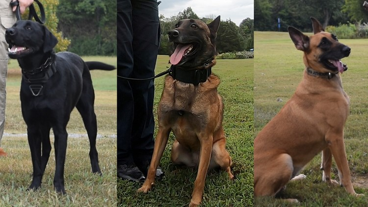 University of Tennessee Police Department K-9s
