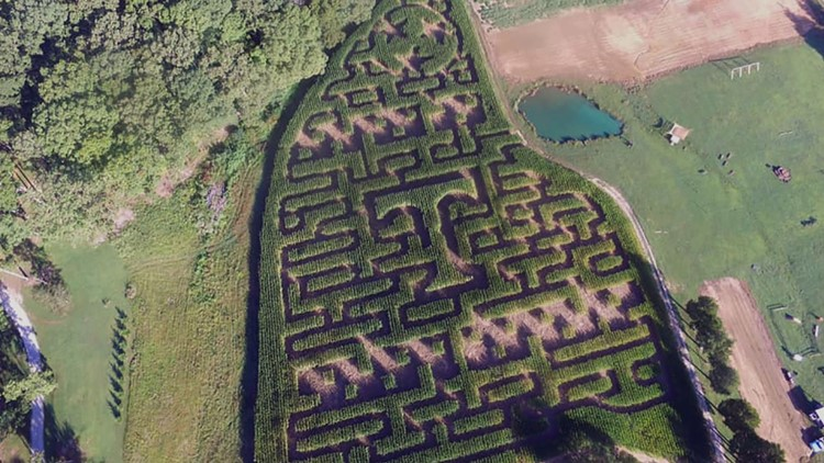 Corn Maze Power T Narramore Farms University of Tennessee