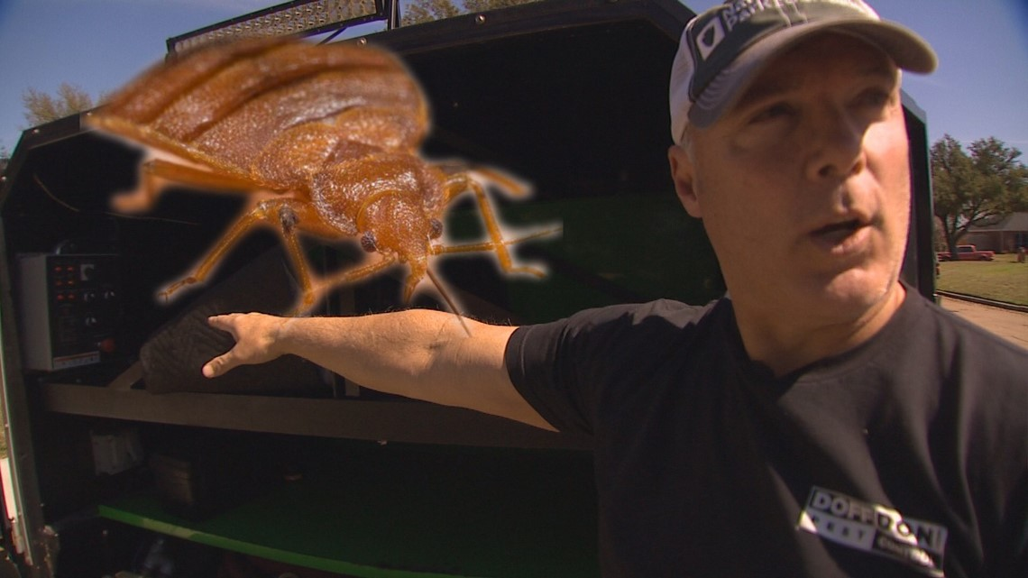 Dallas bed bugs expert says he treats 5 to 10 rideshare vehicles per week