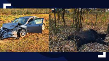 600-pound bear hit, killed in crash on North Carolina highway