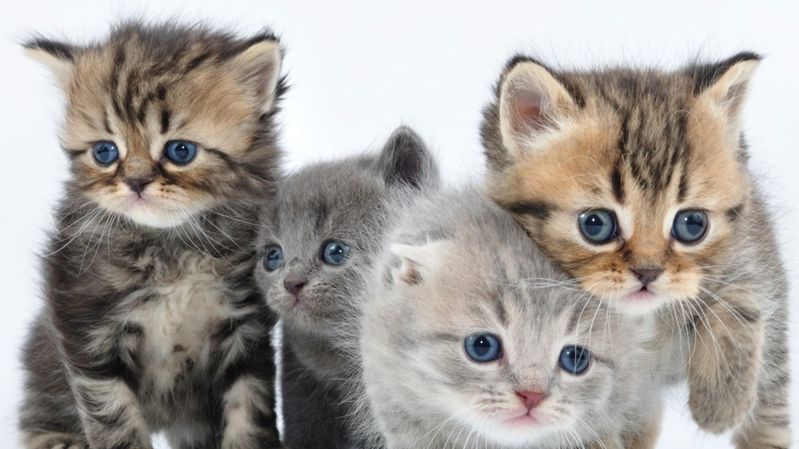 New York becomes the first state to ban cat declawing
