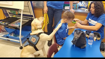 Diabetes alert dog changes boy's life