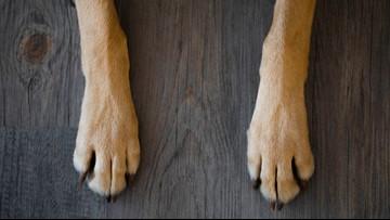 SC man offers $10K for safe return of stolen dog named Bella