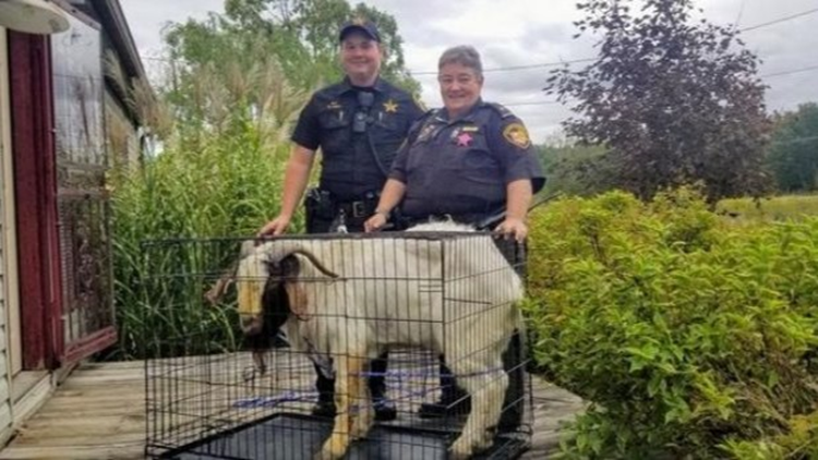 Goat breaks into Ashland County home