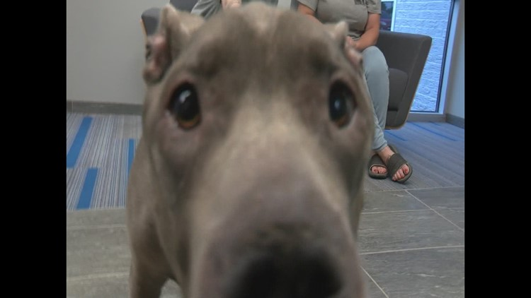 Indiana family reunited with dog who went missing 8 years ago