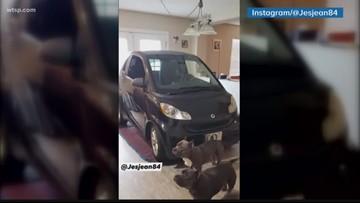 Florida man puts Smart car in kitchen so it doesn't blow away during Doiran