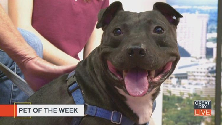 Pet of the week: Ma Barker