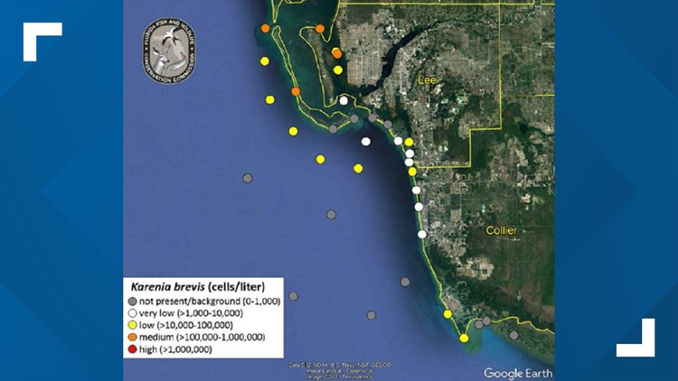 Elevated levels of red tide reported in southwest Florida