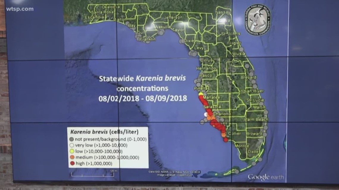 Latest Red Tide Map Shows The Bloom Moving North Wtsp