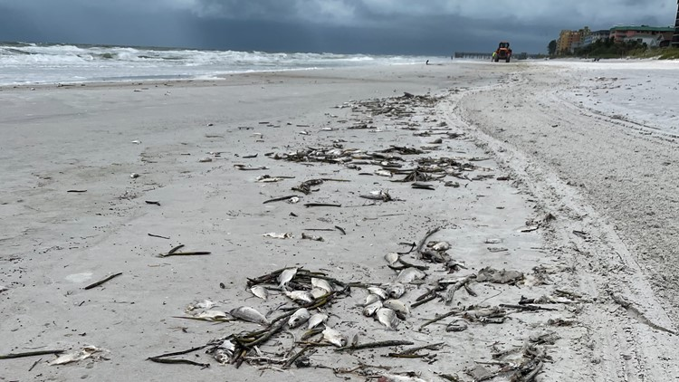 Red tide continues to torment some Tampa Bay area beaches