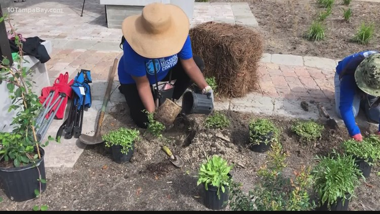 New Tampa Bay butterfly garden brings area some much needed green space