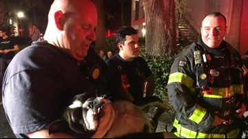 Dogs rescued from New Tampa apartment fire