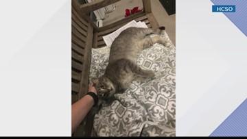 Hillsborough County deputies help cat get home