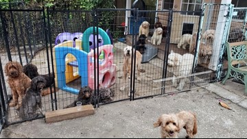19 dogs killed when fire breaks out in dog breeder's Orlando home