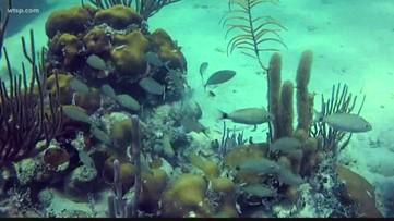 Florida Aquarium celebrates 25 years with new exhibit