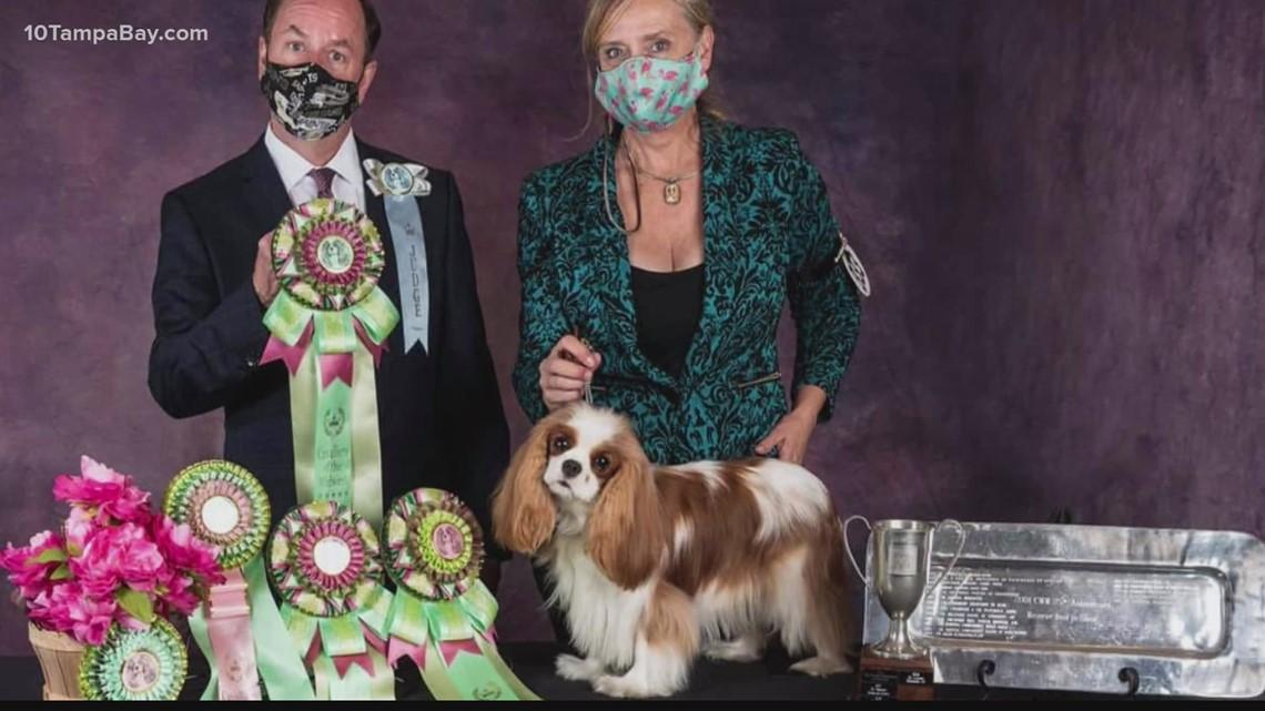 Westminster Dog Show dream comes true for Gulfport woman