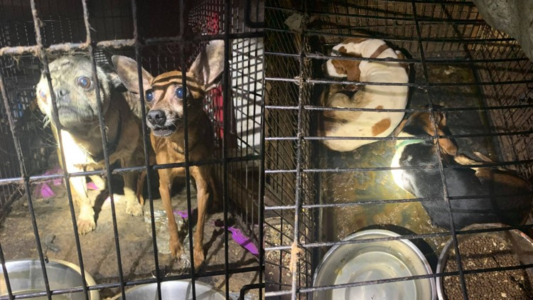 Sheriff: Citrus County couple kept 84 animals, child in 'deplorable' conditions