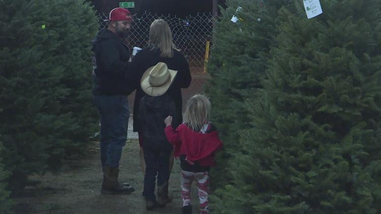 Tips on keeping a real Christmas tree alive and from drying out