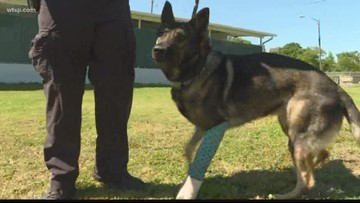 K-9 Titan is home recovering from being shot