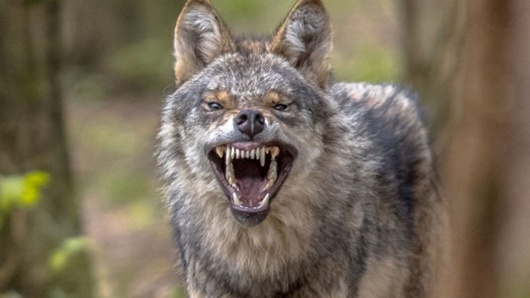 Gas Prices In Orlando Florida >> Florida man fights coyote with coffee mug | wtsp.com
