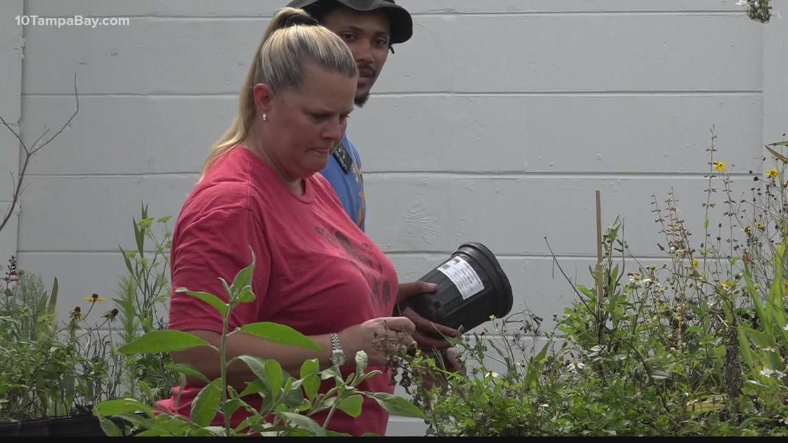 Tampa woman leaves behind career in finance to raise butterflies