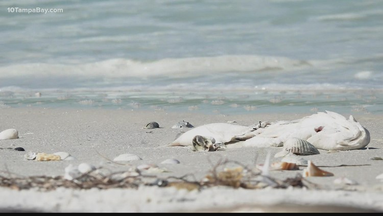 Newest red tide report: 'Most encouraging that we've seen in quite a while'