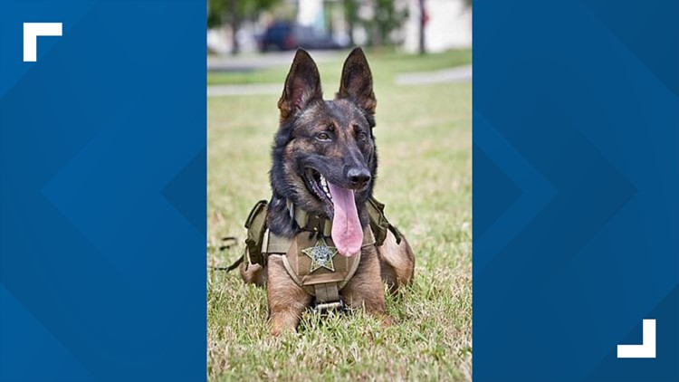 Sarasota County Sheriff's Office K-9 laid to rest after 8 years on the force